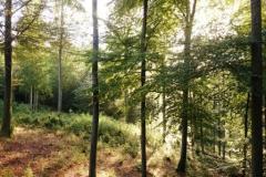 Pfaelzer-Wald-Rodschneis-Schwarzsohl-DSC_2326