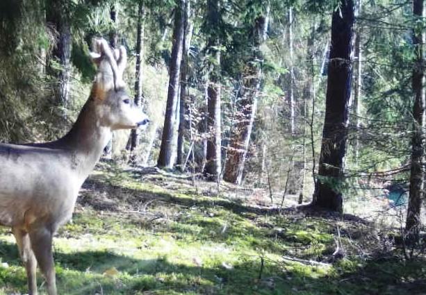 Bock Pirsch Paket für KJäger und Nichtjäger